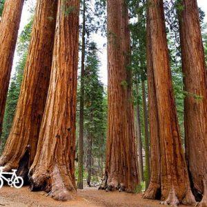 bikesequoia-1024x576-1-500x500